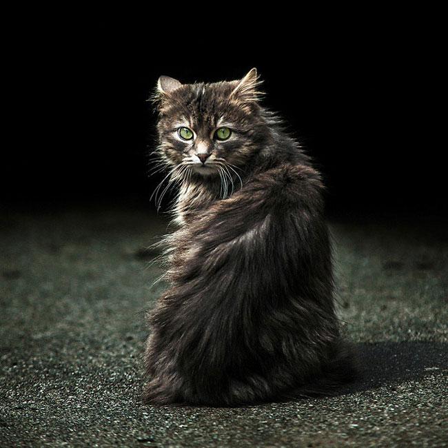 Sergey Polyushko gato ojos verdes