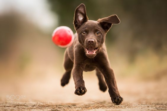 fotos de mascotas perro saltando