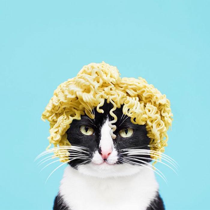 fotos gatos graciosas
