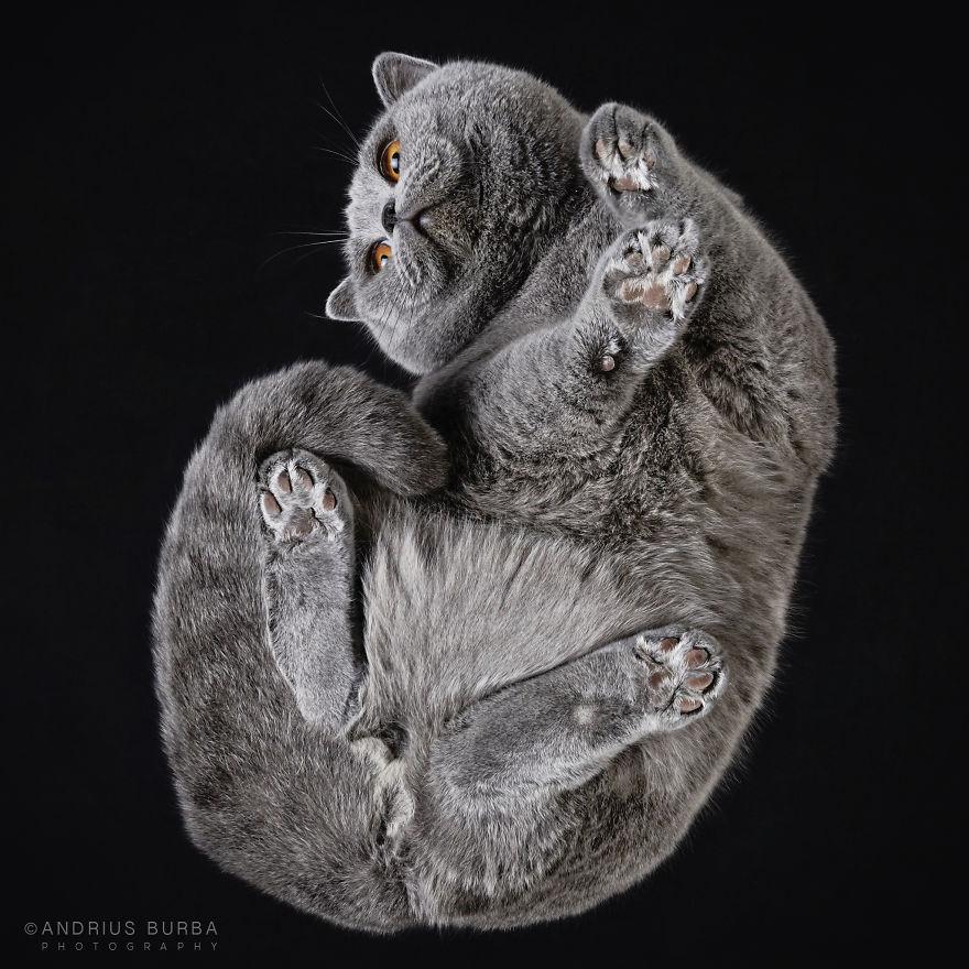 fotos de gatos internet