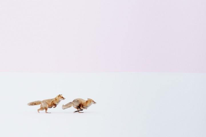 fotos zorros japón