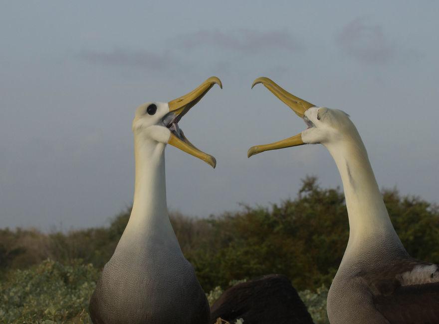 fotos de galapagos